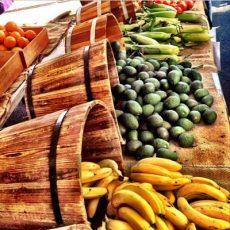 Organic Market - Macleay Island @ The Lemon Farm | Macleay Island | Queensland | Australia